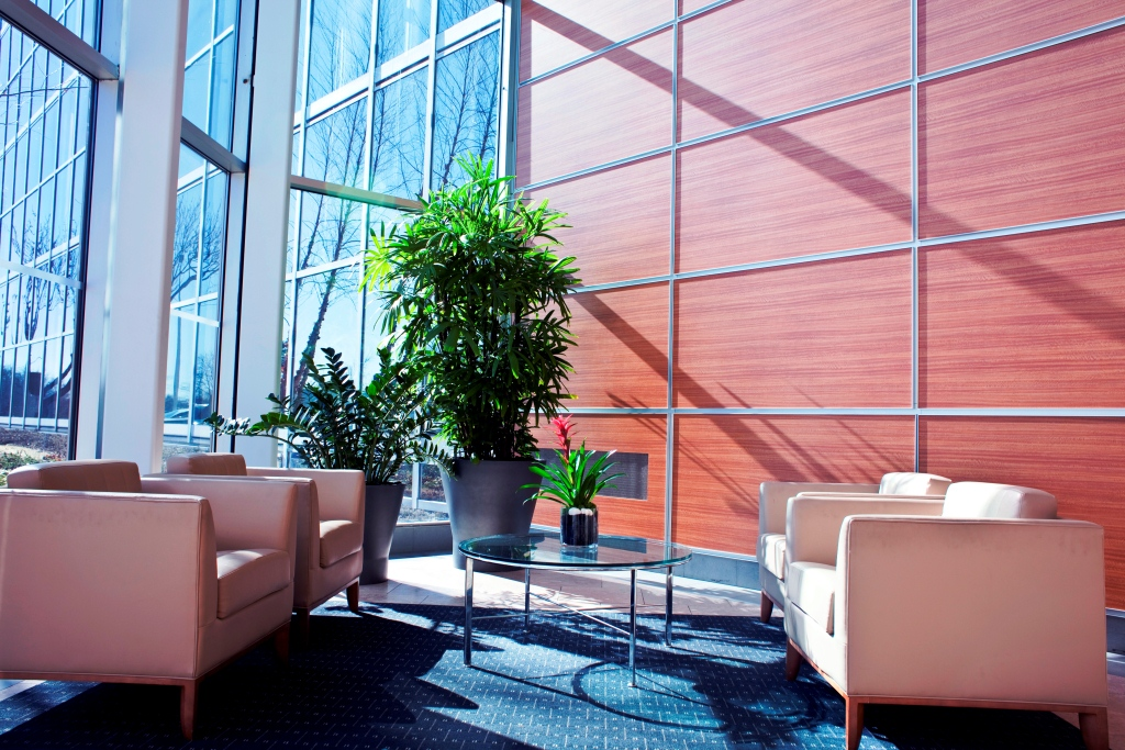 How We Design Your Office Greenspace