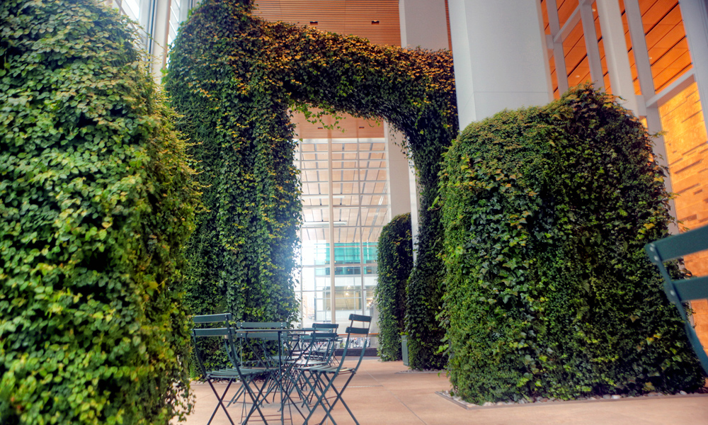 What is an indoor living wall?