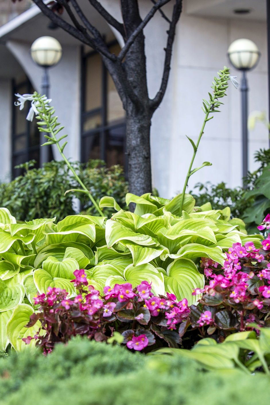 Capturing Color to Enhance Your Landscaping