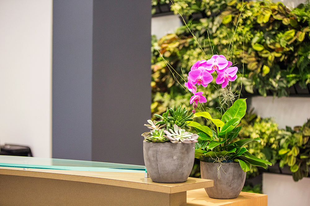 The Best Office Plants to Improve Mood and Increase Creativity