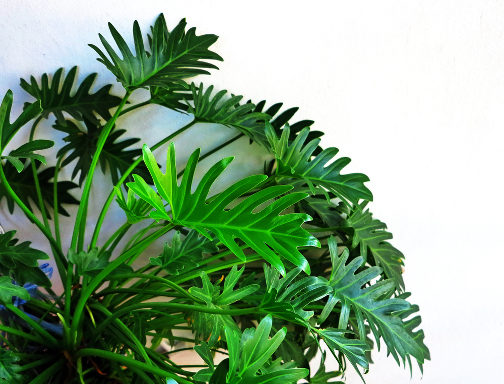 Tropical Plant Tips For Plant Parents