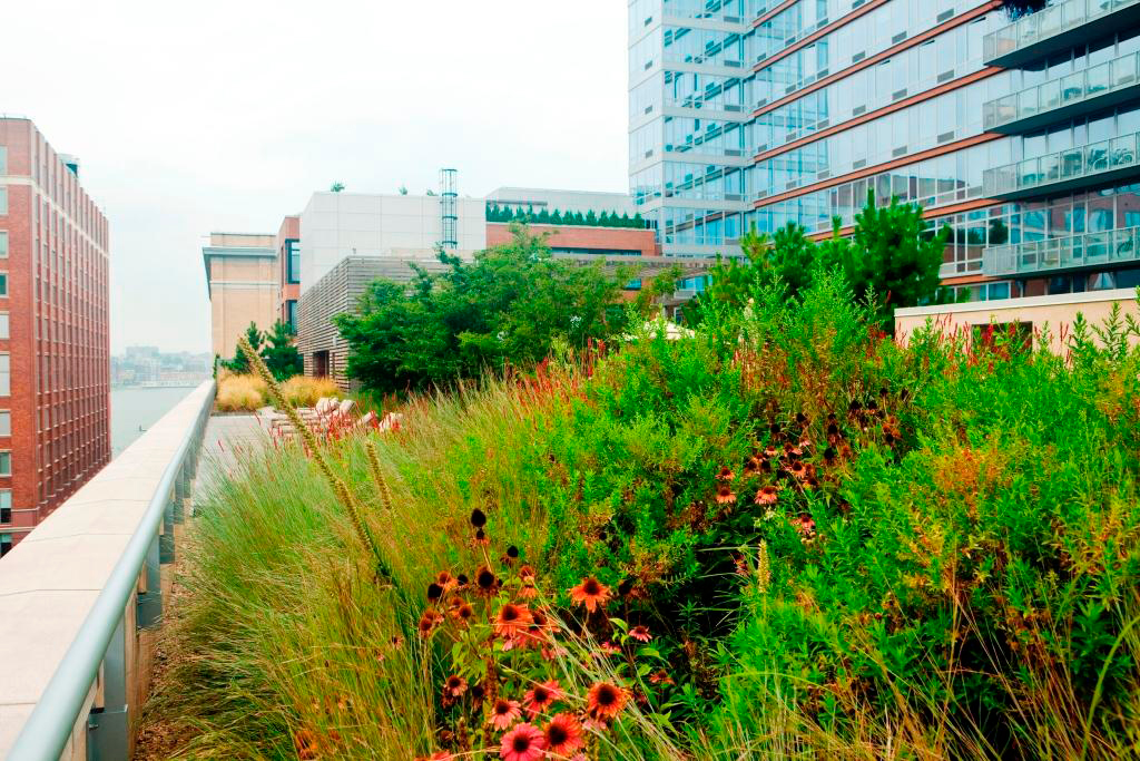 Outdoor Sustainable Plantings NYC - Exterior Landscaping - John Mini