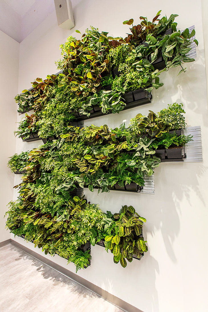 Asymmetrical Green Wall
