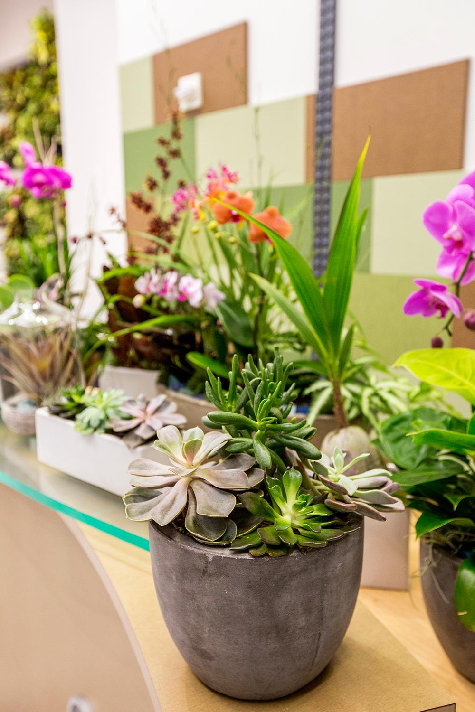 Succulent Arrangements Color Arrangements Indoor Landscaping