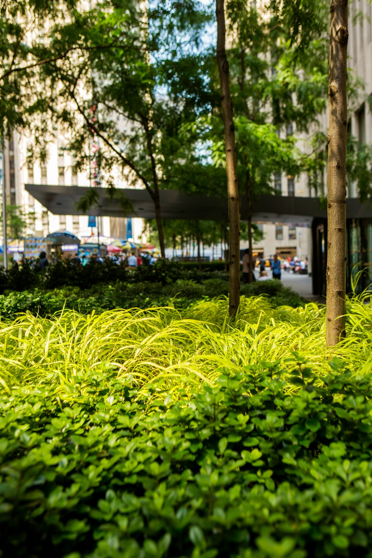Avenue Plantings