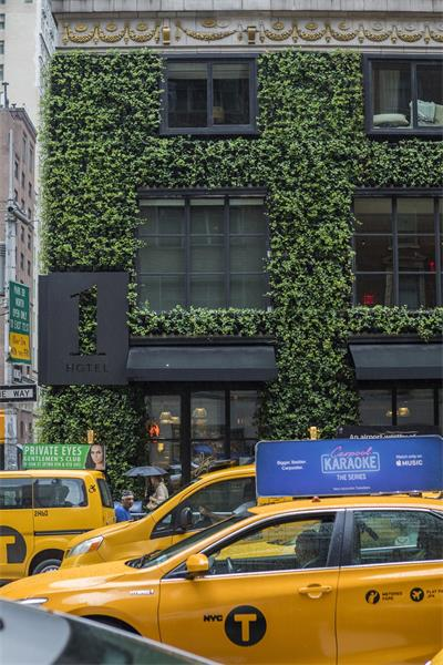 Ivy On The Avenue