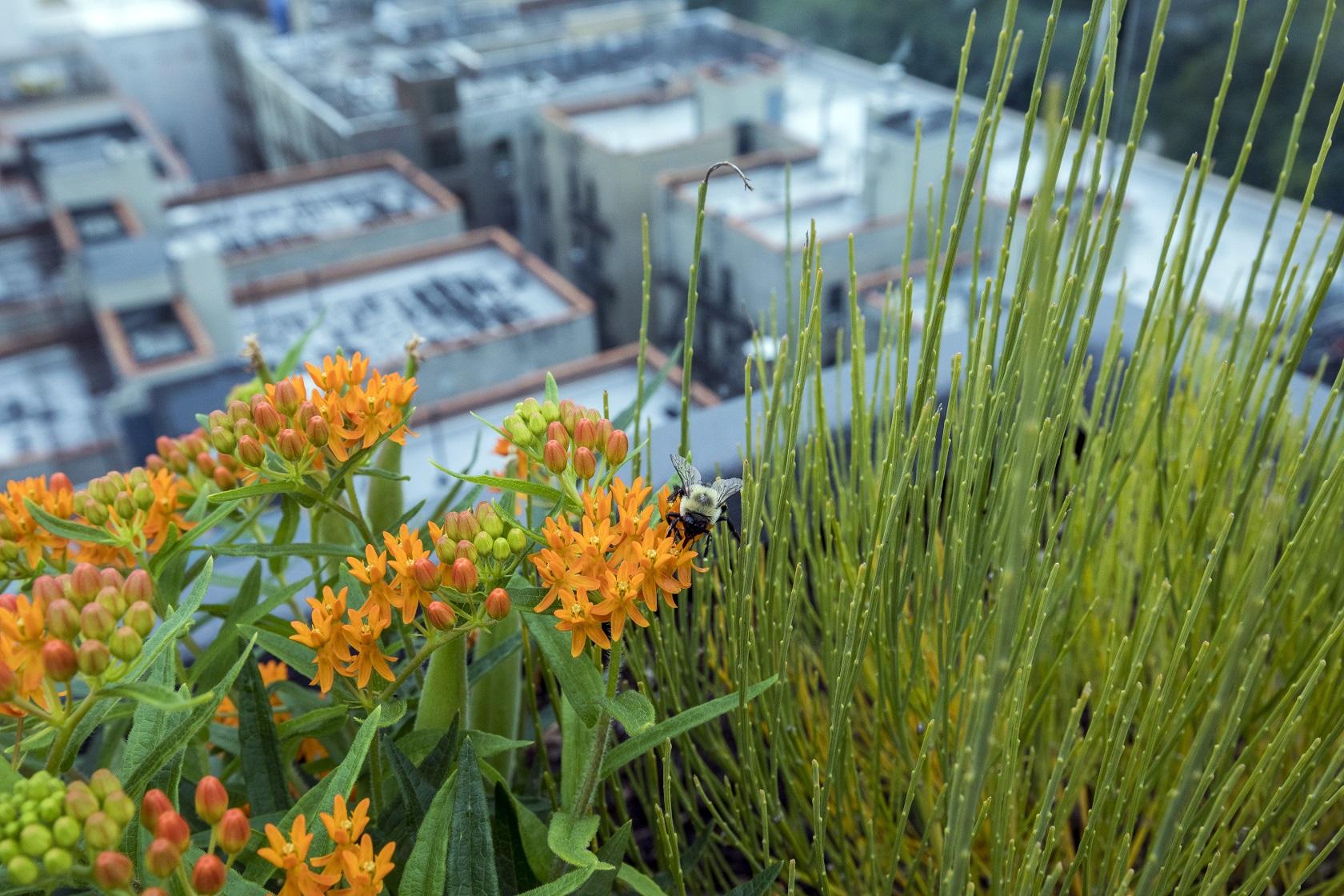 A sustainble and native plant pallette attracts pollinators
