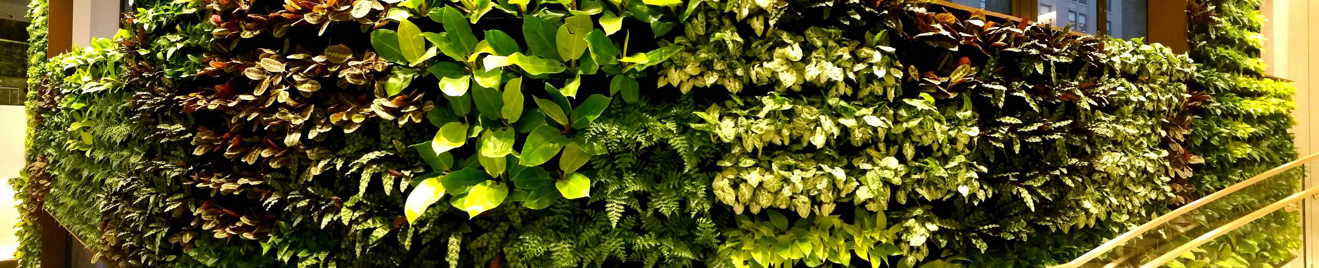 The juxtaposition of organic and rectilinear form of this living wall creates a dynamic backdrop for the centralized atrium and