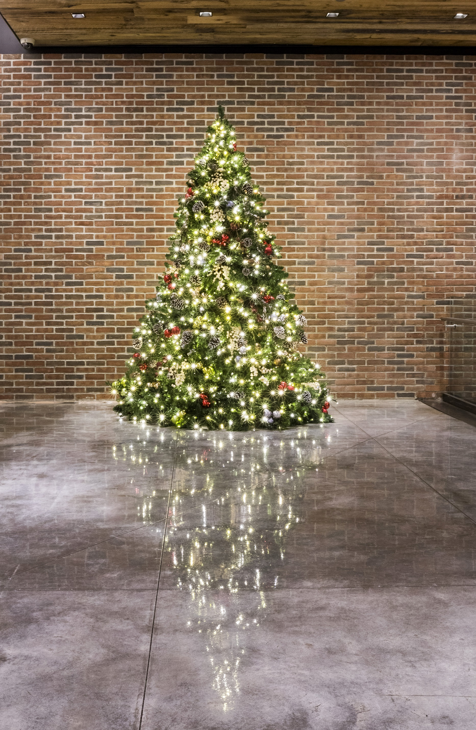 A brick façade, in combination with polished concrete floors, creates the perfect stage for this evergreen tree.