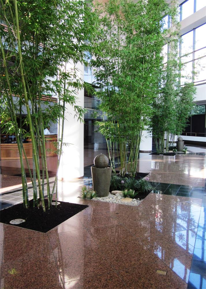 atrium bamboo garden in corporate lobby indoor landscaping
