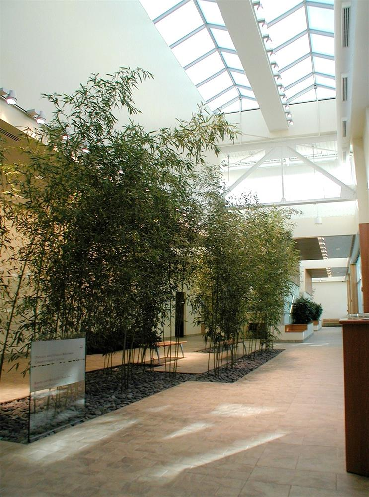 Indoor Bamboo Garden Award Winning Landscapes Nyc
