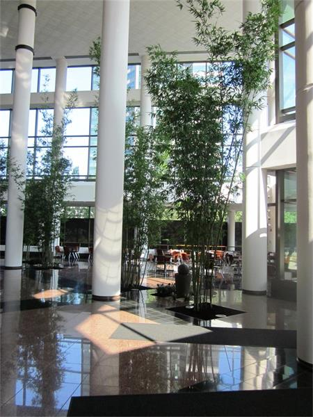 Nj Bamboo Landscaping: Indoor, Outdoor & Holiday Projects